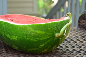 Watermelon with Tail = Juicy Ripe Watermelon